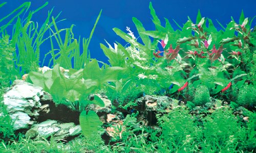 31126 Fotorückwandzuschnitt Pflanzen 1 / 5, 120 x 50 cm