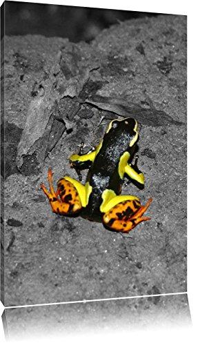teinturier-petite-grenouille-sur-le-plancher-de-foret-noir-blanc-sur-toile-enorme-xxl-photos-complet