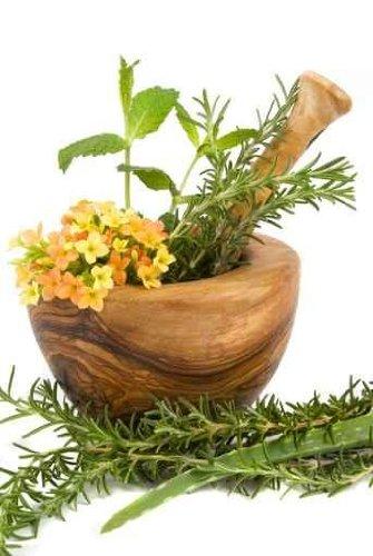 Herbs - 42