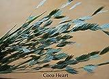 ~Coco Heart~ マイルドオーツ (木の実・ドライフラワー.リース、アレンジ)