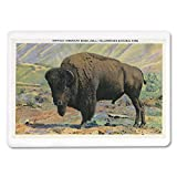 Yellowstone National Park, Wyoming - View of a Buffalo (American Bison) (Playing Card Deck - 52 Card Poker Size with Jokers)