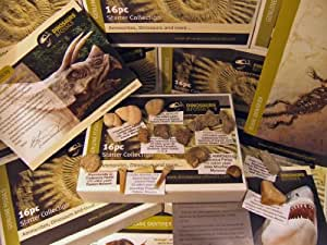 LOW INTRODUCTORY PRICE - Fossils for Children - Starter Collection - 16 GENUINE fossils collection - Fossils for Kids - Ammonites, Dinosaurs and more - Educational Set - NEW Packaging