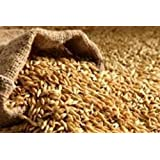 Barley Seed 5 Lb Hulled SEED By Detwiler Native Seed.Good For Sprouting, Planting or Food Storage