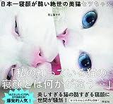 日本一寝顔が酷い絶世の美猫セツちゃん