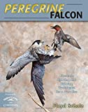 img - for By Floyd Scholz Peregrine Falcon: Dynamic Carving and Painting Techniques for a New Era [Hardcover] book / textbook / text book