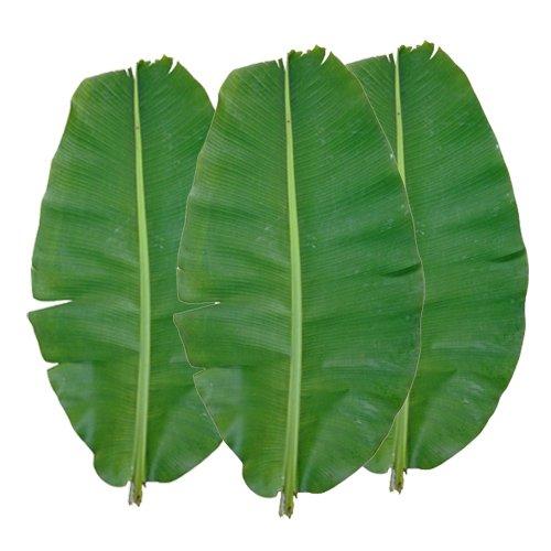 沖縄県産バナナ葉(3枚)