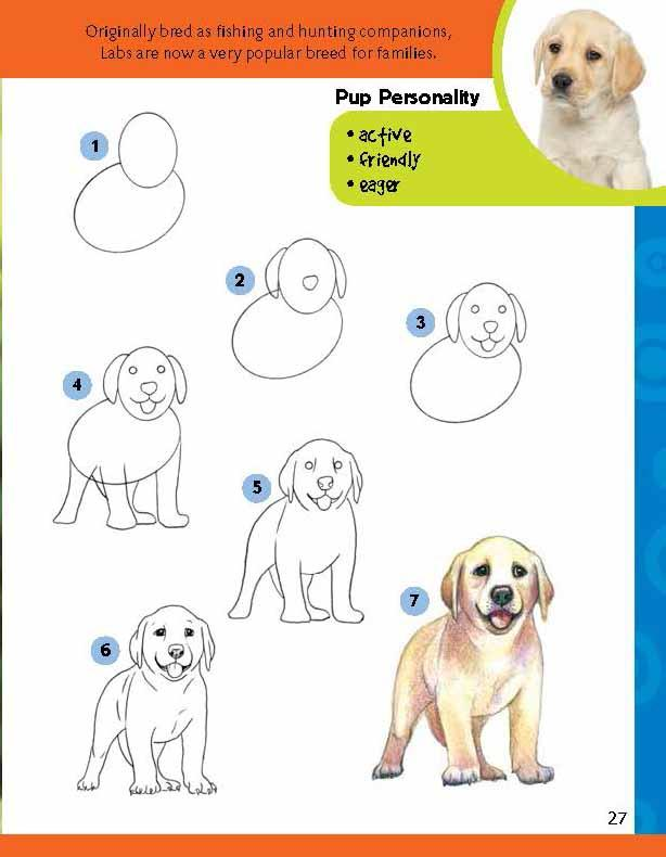 Labrador Puppy Drawing Learn to Draw a Labrador Puppy