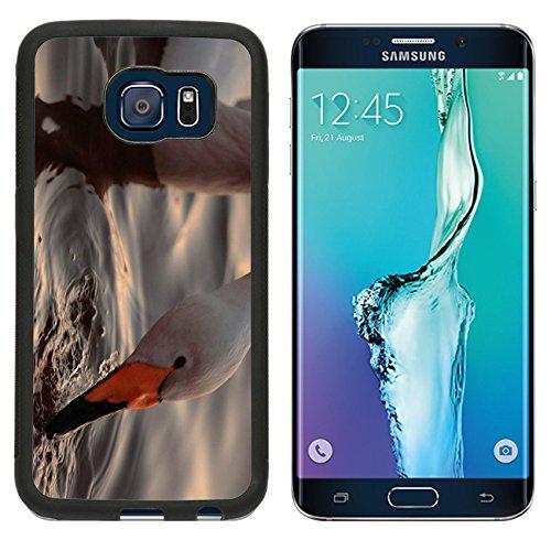 msd-premium-samsung-galaxy-s6-edge-aluminum-backplate-bumper-snap-case-a-closeup-portrait-of-whooper