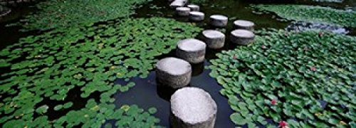 panoramic-images-water-lilies-in-a-pond-helan-shrine-kyoto-japan-artistica-di-stampa-9144-x-3048-cm