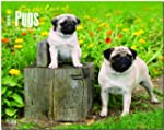 Pugs, For the Love of 2015 Deluxe