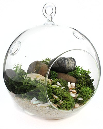 6.5-Inch Hanging Glass Terrariums for Succulents and Air Plants, Large Glass Orb Planters (Set of 2)