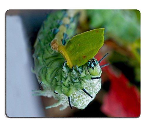 liili-mouse-pad-de-goma-natural-mousepad-la-oruga-comer-hojas-de-un-arbol-imagen-id-14651276