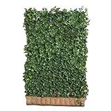 suchergebnis auf f r sichtschutz blumen pflanzen garten. Black Bedroom Furniture Sets. Home Design Ideas