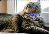 Safety Kitty(R) LED Katzenhalsband leuchtend - reflektierend - Sicherheitsverschluss - Sicherheit durch Sichtbarkeit - Lebenslange Garantie -