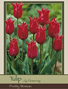 Honeyman Farms Tulip Lily Flowering Pretty Woman Pack of 25 Bulbs