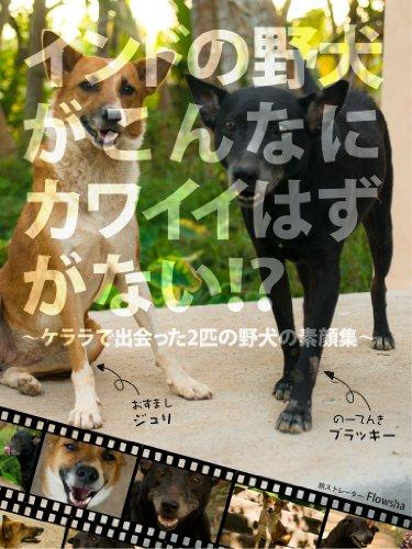 インドの野犬がこんなにカワイイはずがない!? 〜ケララで出会った2匹の野犬の素顔集〜