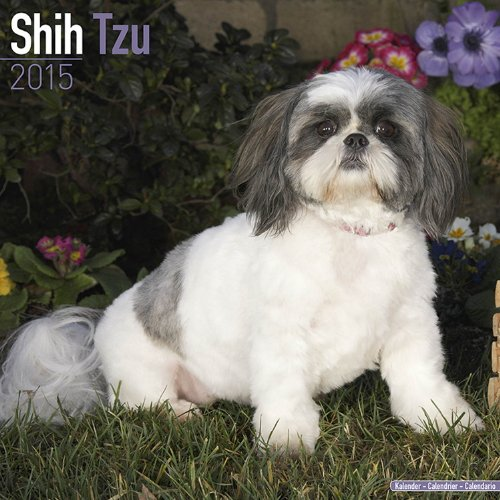 Shih Tzu Calendar - Just Shih Tzu Calendar - 2015 Wall calendars - Dog Calendars - Monthly Wall Calendar by Avonside