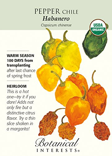 Habanero Chile Pepper - 30 Seeds - Organic (Garden Salsa Pepper Seeds compare prices)