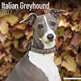 Italian Greyhound Calendar 2017 - Dog Breed Calendars - 2016 - 2017 wall calendars - 16 Month by Avonside