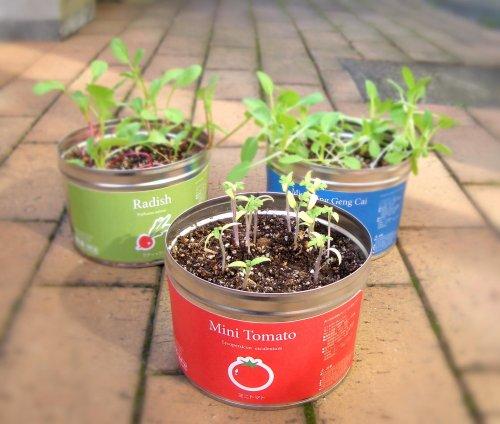 栽培セット リトルガーデンプロ ミニトマト