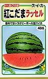 【種子】紅こだまスイカ ラッセル 野菜 1.4ml トーホクのタネ