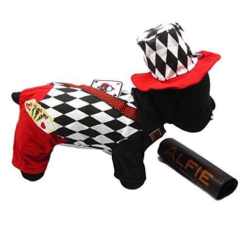 alfie-pet-by-petoga-couture-aldis-magician-costume-size-medium