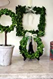 Flora Decor Preserved Boxwood Square Wreath 10""