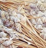 500 Seashell Toothpicks Beach Wedding/tiki Bar/Restaurant