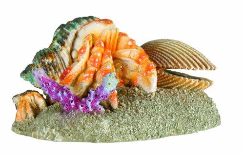 Bernard-lermite-dans-sa-coquille-pour-aquarium-10-cm