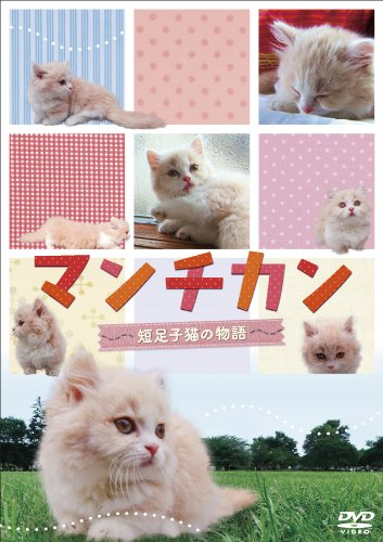 マンチカン 〜短足子猫の物語〜 [DVD] -