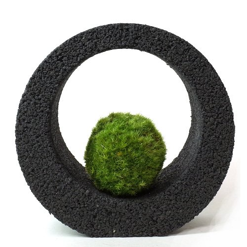 【eco-pochi】 苔ポチ×リングS 黒 コケポチ こけぽち 観葉植物 苔玉