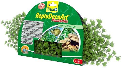 Sichtschutz Pflanzen Ungiftig : Terrarium Pflanzen – Preisvergleiche ...