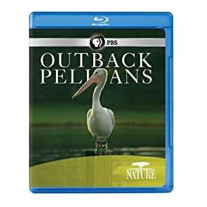 Nature: Outback Pelicans [Blu-ray]