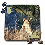 Angelique Cajam Big Cat Safari - Young female lion searching for food - 10x10 Inch Puzzle (pzl_26827_2)