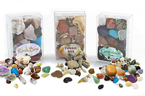fossil-rock-gemstone-box