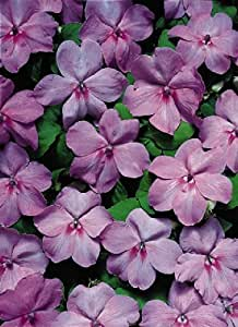 Kraft Seeds Impatiens Mix Flower Seeds by Kraft Seeds