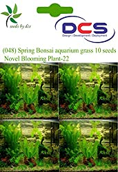 DCS (048) Spring Bonsai aquarium grass 10 Seeds Clear Novel Blooming Plant-22