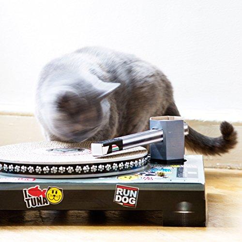 Pics Photos - Cat Dj Scratching Deck Home Pets Cat Dj Scratching Deck