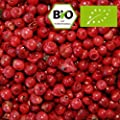 """Rosa Pfeffer (rosa Beere, """"roter Pfeffer""""), 50g (von Pfeffercorner) von Pfeffercorner bei Gewürze Shop"""