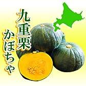 【とやま農場】北海道十勝産 九重栗かぼちゃ約10kg