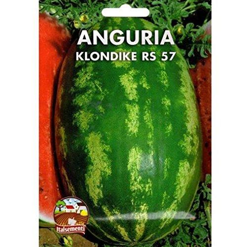 vivai-le-georgiche-anguria-klondike-rs-57-semente