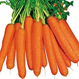 Pepper Agro Carrot Early Nineties Seeds