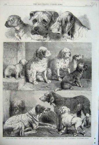 1861 Prize Dogs Sporting Exhibition Birmingham Animals