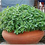 2016 Special Offer Hot Sale Indoor Plants Regular Bonsai Seeds 100 Pcs Seeds Spearmint Mentha Spicata Mint For...