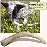 Antler Dog Chew, X-Large 8″-10″ Long, 1 Piece
