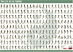 Tai Chi in 24 Forms