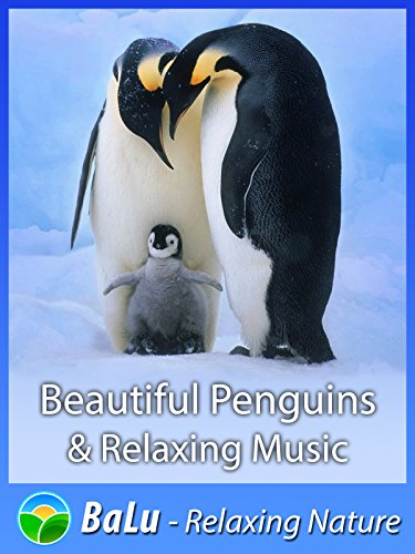 Beautiful Penguins & Relaxing Music