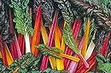 Swiss Chard Seeds,swiss Chard, Rainbow, Heirloom, Organic 25+seeds, Non Gmo