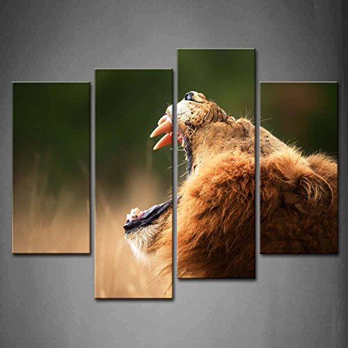 4 Panel Wall Art Lion Displays Dangerous Teeth Kruger National Park South Africa In Grassland Painting The Picture Print On Canvas Animal Pictures For Home Decor Decoration Gift Piece (Stretched By Wooden Frame,Ready To Hang)