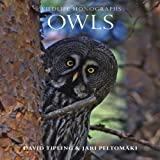 Owls Wildlife